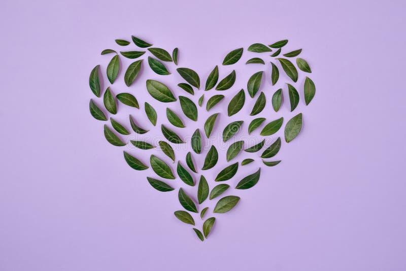 创造性的夏天构成 绿色叶子在紫罗兰色背景的心形安排了 概念亲吻妇女的爱人 平的位置,顶视图 库存照片