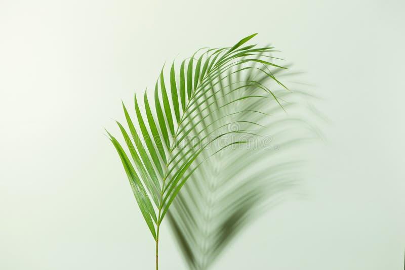 创造性的布局由五颜六色的热带叶子制成在白色backgr 免版税图库摄影