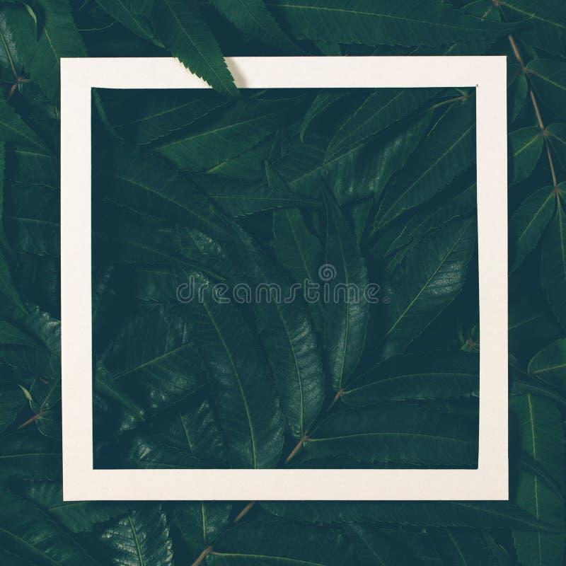 创造性的布局由绿色制成离开与白色框架 顶视图,平的位置 库存图片