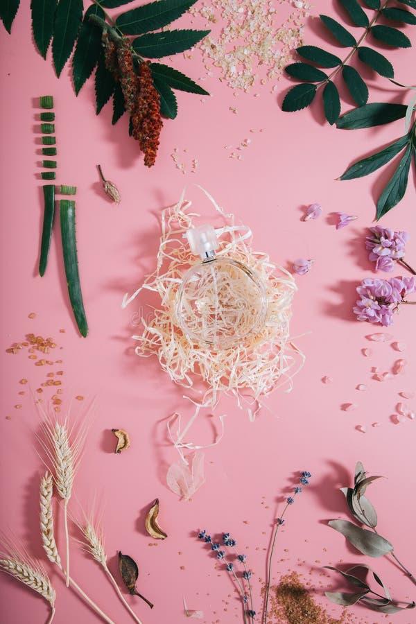 创造性的平的香水嘲笑位置顶视图在淡色千福年的桃红色纸背景拷贝空间 文本字法的模板 免版税库存图片