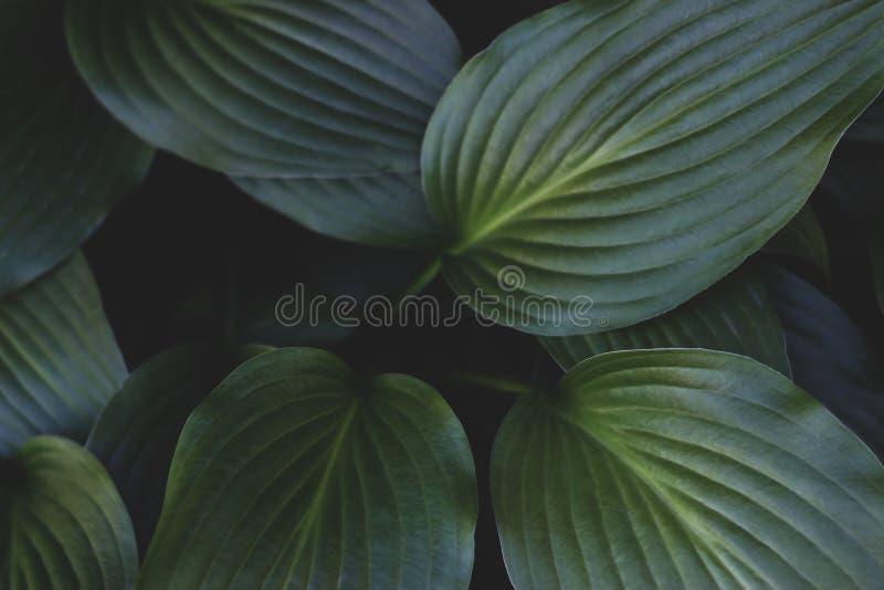 创造性的热带绿色叶子布局 葡萄酒自然概念 ?? 免版税库存照片