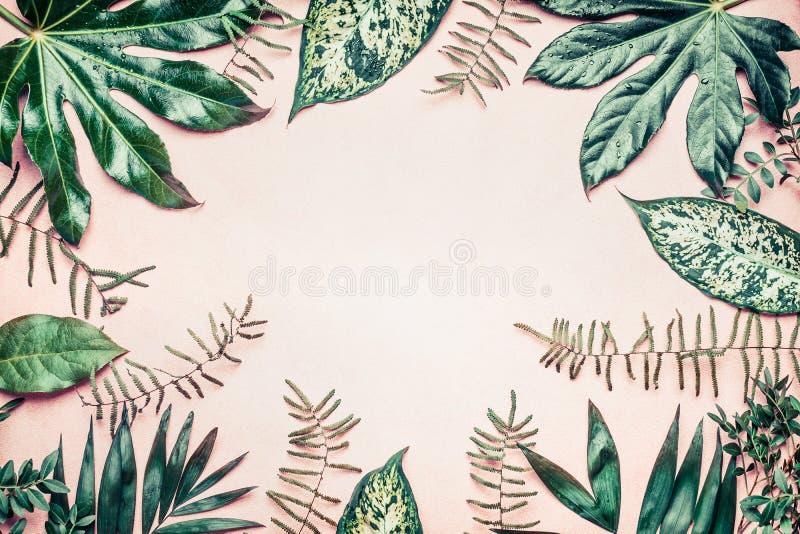 创造性的自然框架由热带棕榈和蕨叶子制成在淡色背景 免版税库存照片