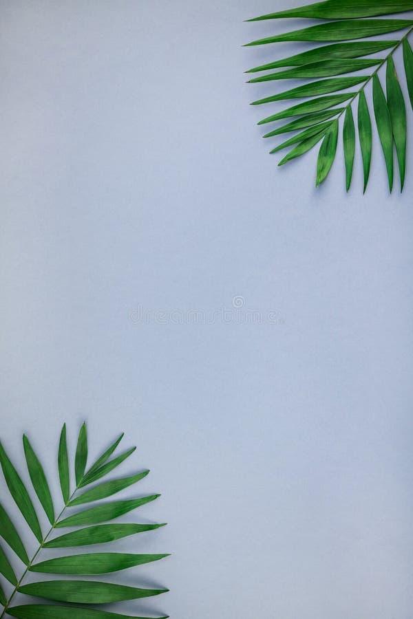 创造性的舱内甲板在蓝灰色与拷贝空间的纸背景放置绿色热带棕榈叶顶视图  最小的热带棕榈叶 免版税库存图片