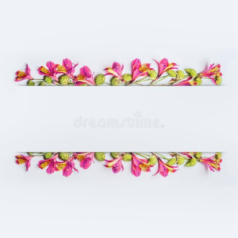创造性的花卉设计框架、边界或者横幅布局与桃红色和绿色异乎寻常的花在白色 免版税库存图片