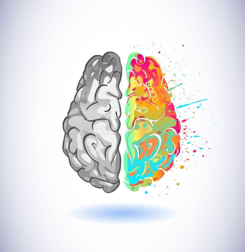 创造性的部分和逻辑脑子分开传染媒介例证元素 库存例证