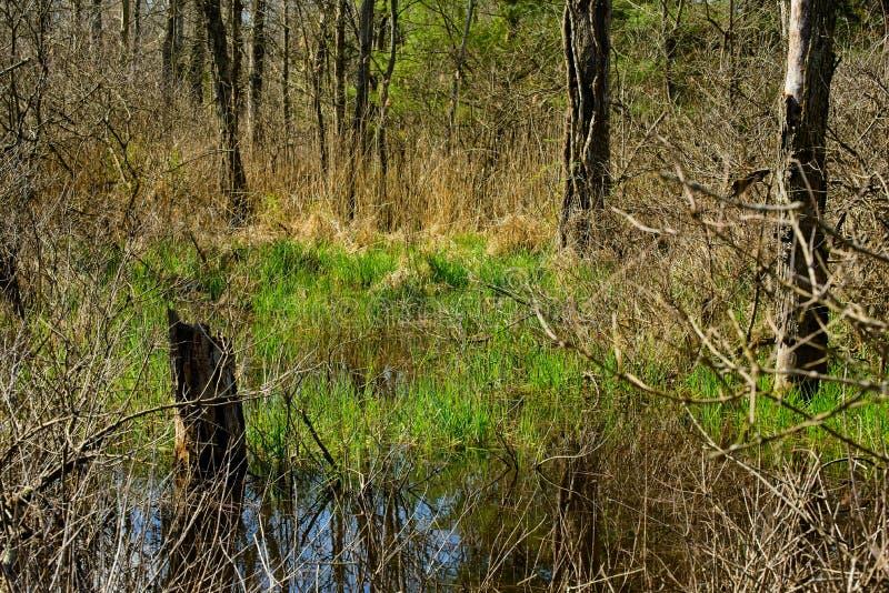 初春的小湿地 免版税图库摄影