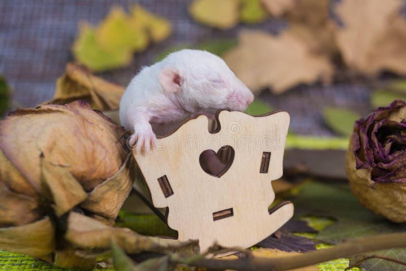 初期的概念 鼠在一个小轻便小床坐 图库摄影
