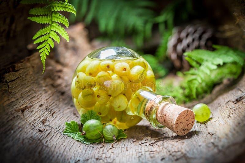 利口酒由鹅莓和酒精制成在森林里 库存照片