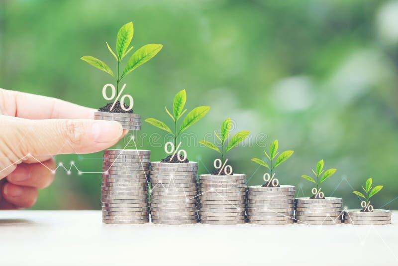 利息和开户概念,生长在堆的植物在自然绿色背景的硬币金钱 免版税库存图片