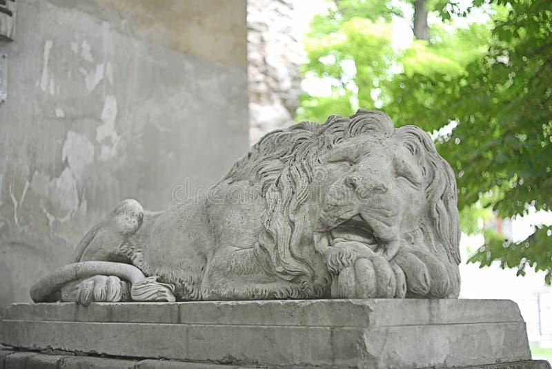 利沃夫历史狮像 图库摄影