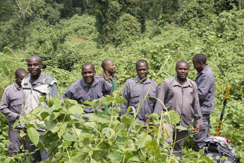 别动队员在Biwindi国家公园 库存图片