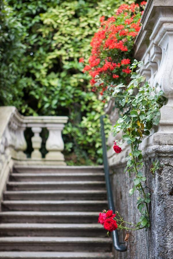 别墅Carlotta花在科莫湖的 免版税库存图片