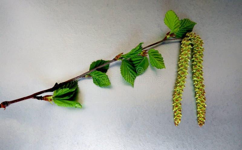 别针的花溶化了sergi 图库摄影