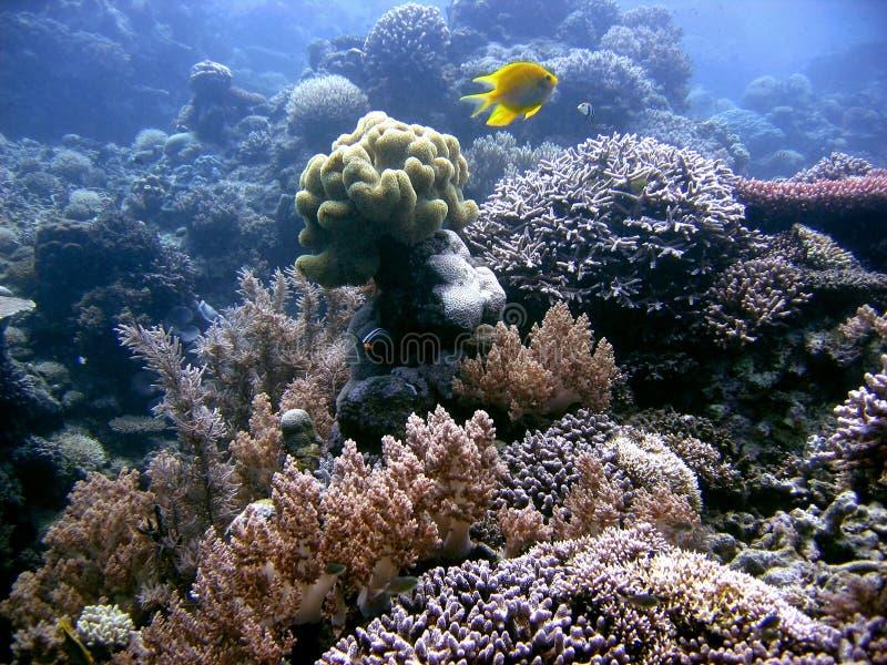 到处珊瑚 免版税图库摄影
