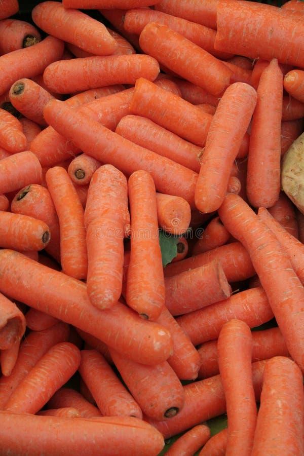 到处红萝卜 图库摄影