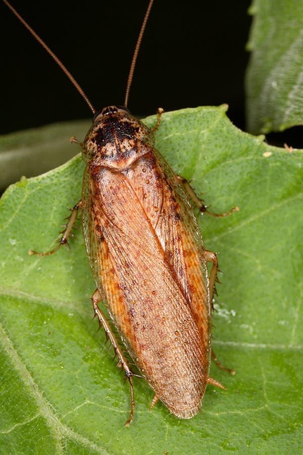 到处蟑螂在密林 库存照片