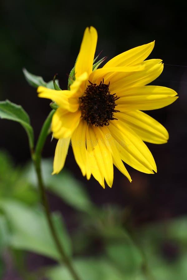 Download 到太阳 库存照片. 图片 包括有 五颜六色, 艺术, 以为特色, 增长, 强烈, 佐治亚, 大农场主, ,并且 - 59104552