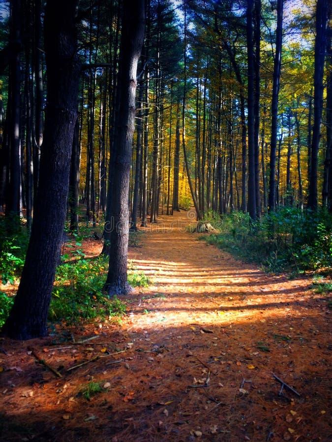 到森林 图库摄影