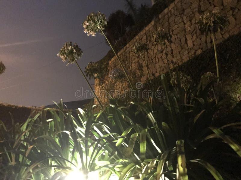 到达为天空的花 库存照片