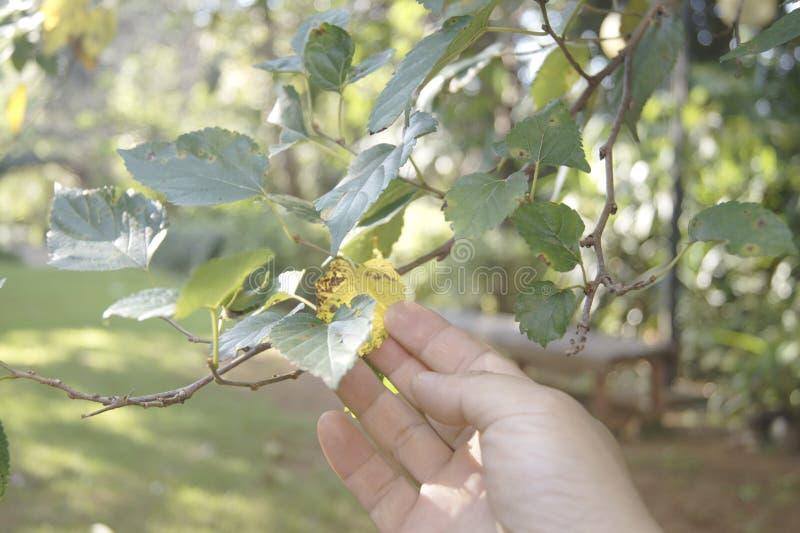到达叶子的右手 库存照片