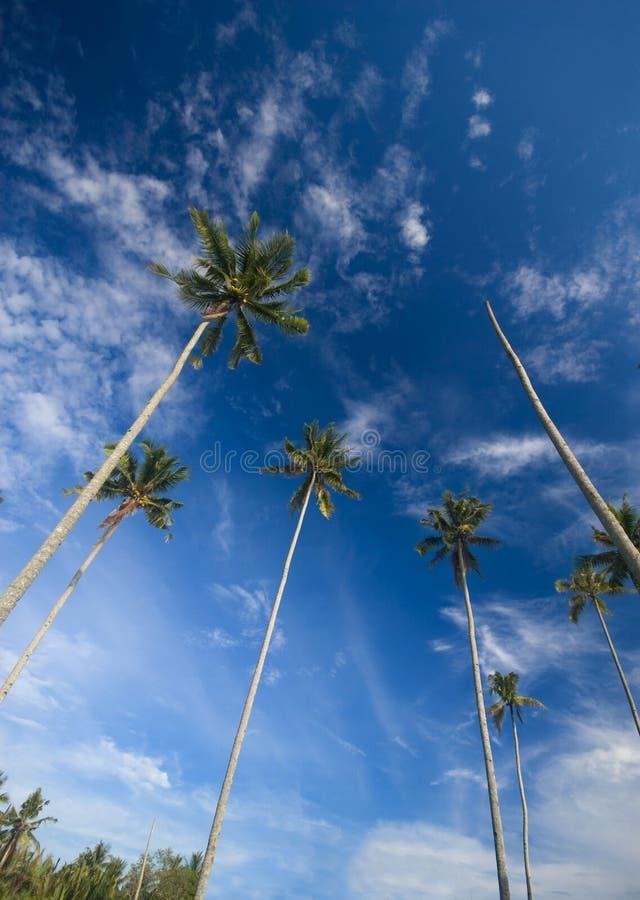 到达天空的椰子掌上型计算机对结构树 库存图片