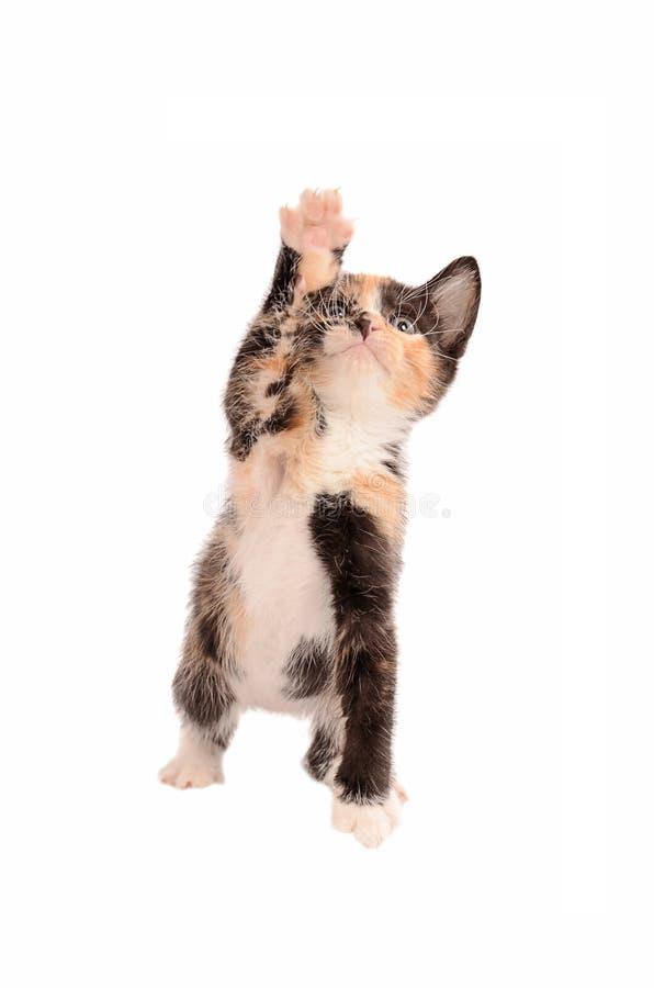 到达白棉布的小猫  库存照片
