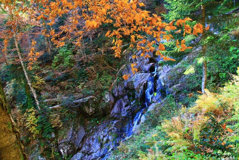 到Mendelikh瀑布的旅行,深森林,瀑布 库存照片