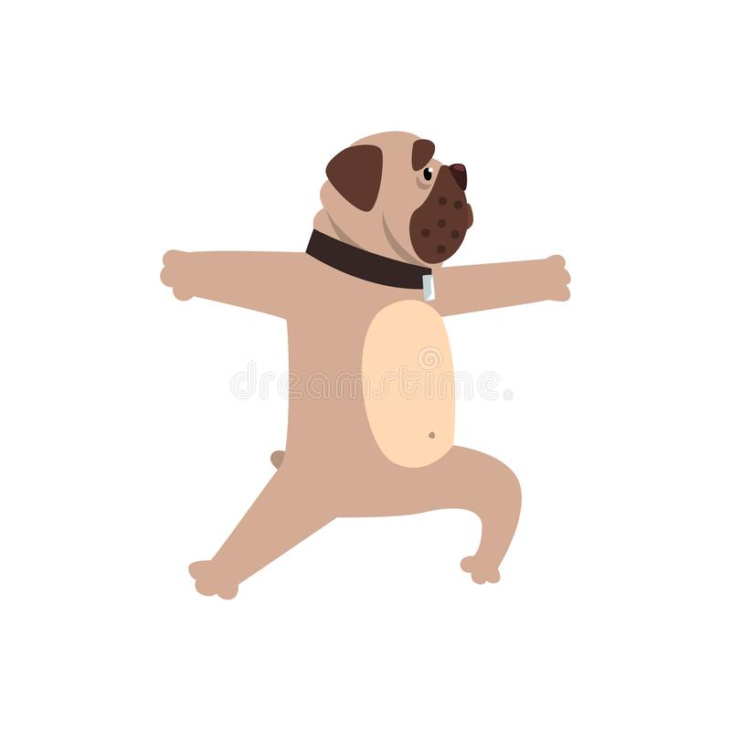 制定出瑜伽锻炼,滑稽的在白色背景的狗实践的瑜伽动画片传染媒介例证的法国牛头犬 皇族释放例证