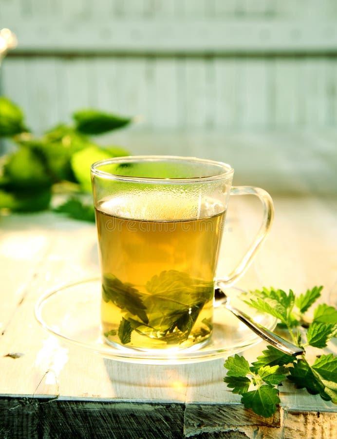 刷新的杯子健康荨麻茶 免版税库存照片