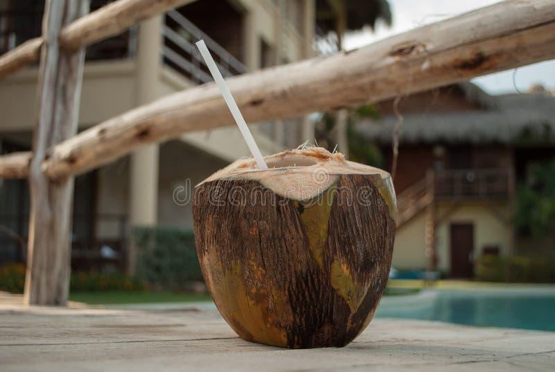 刷新,寒冷,可口夏天多米尼加共和国的饮料椰树疯子 库存照片