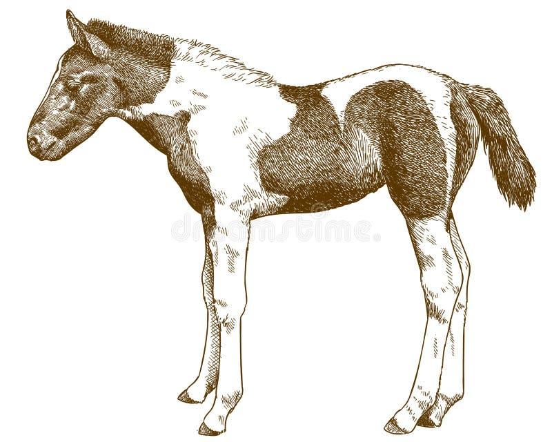 刻记马驹的古色古香的例证 免版税库存照片