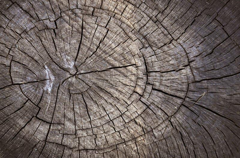 削减木的纹理 免版税图库摄影