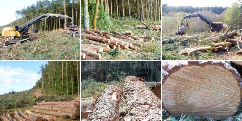 削减概念-多重图象的森林 免版税库存图片