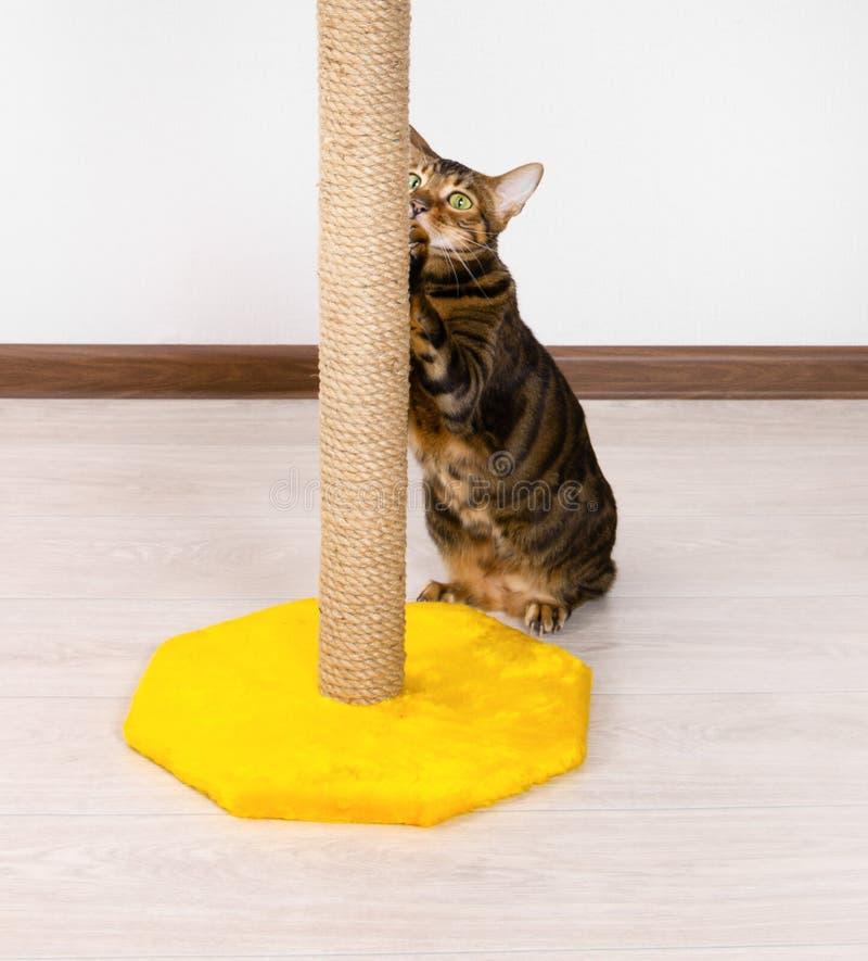 削尖在爪磨削器的猫爪 免版税库存照片