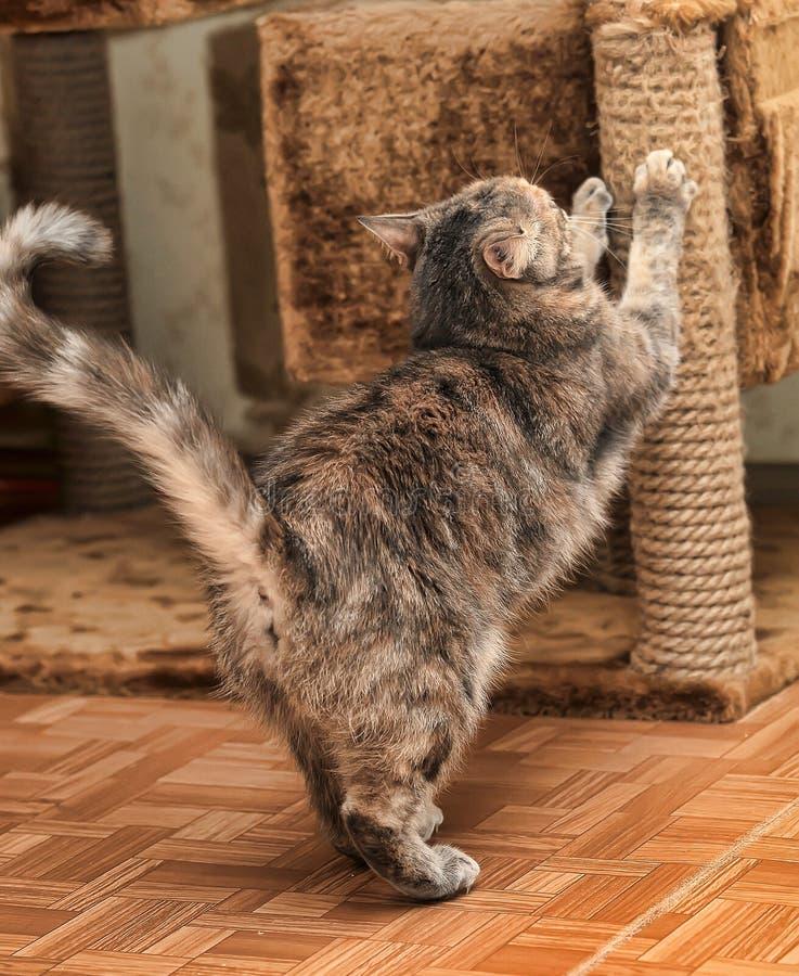 削尖它的爪的猫 免版税库存照片