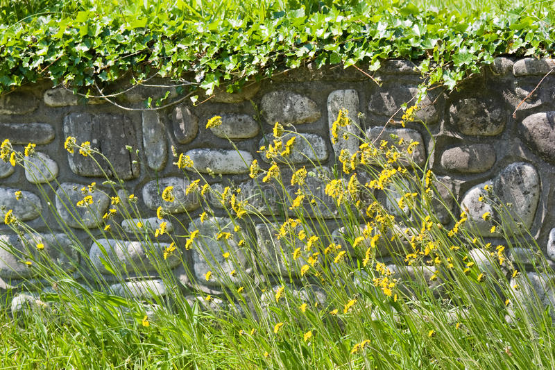 前保留的石墙野花 库存照片