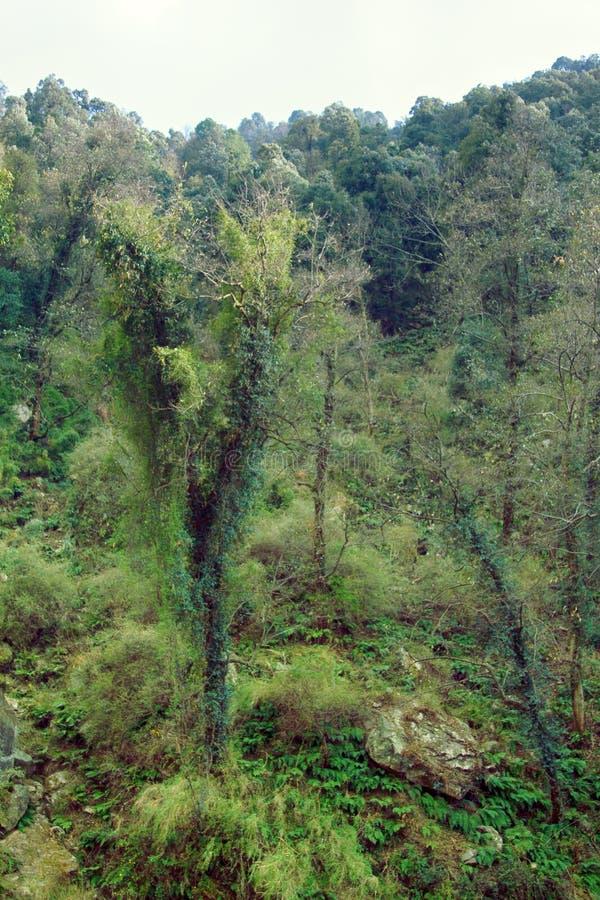 前喜马拉雅山的热带雨林 免版税库存照片