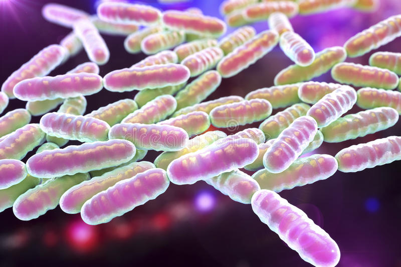 前生命期的细菌乳酸杆菌属 皇族释放例证