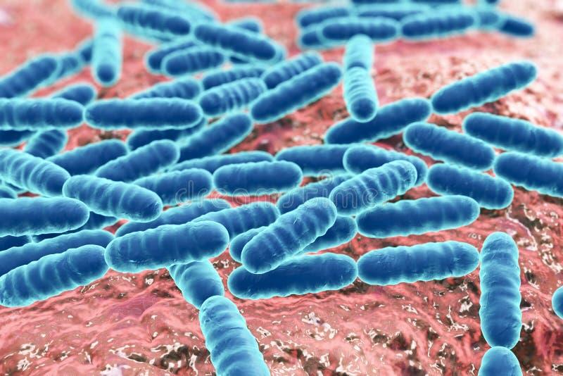 前生命期的细菌乳酸杆菌属 库存例证