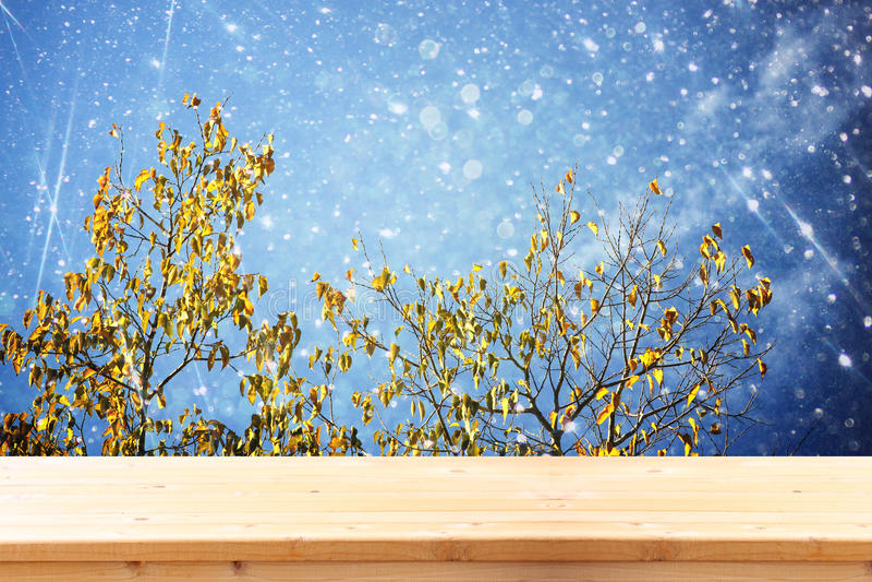 前面土气木委员会的金黄秋天树图象和背景在有闪烁覆盖物的森林里 免版税库存图片