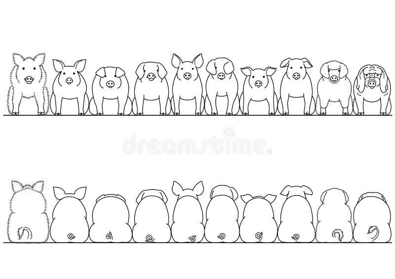 前面的猪和后面边界集合各种各样的品种  向量例证