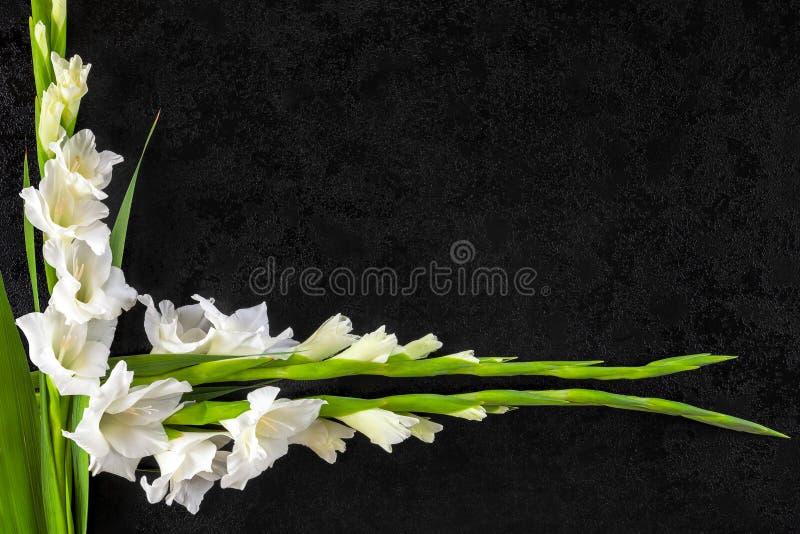 剑兰花从上面 库存图片