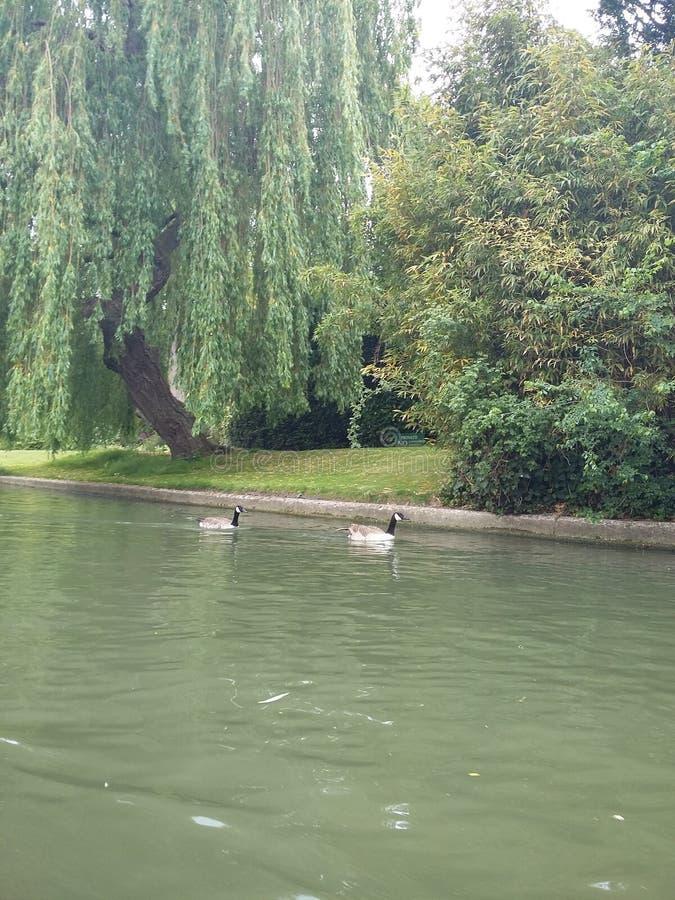 剑桥河 免版税图库摄影