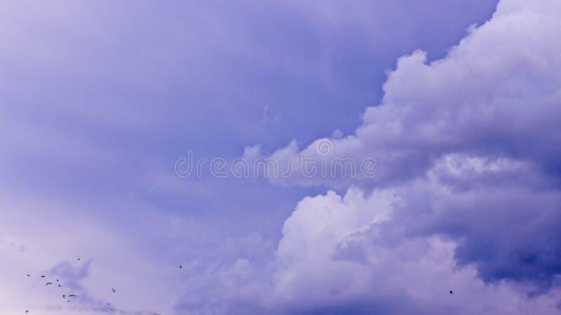 剧烈的天空阴沉的天气使云彩变暗 以前雨和雷暴与鸟 免版税库存图片