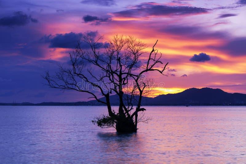 剧烈的日落或日出,天空的长的曝光图象覆盖在与单独树的山在热带海 库存照片
