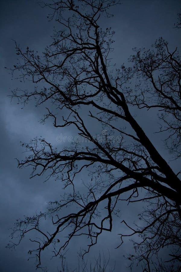 剧烈的树 图库摄影