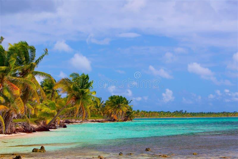 剧烈的海滩在有棕榈树和白色沙子的加勒比 免版税图库摄影