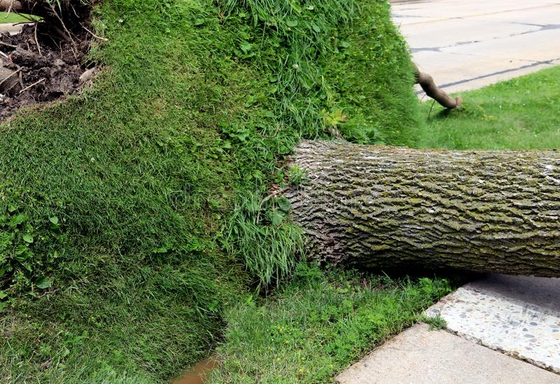 剧烈风暴击倒的大阳台树 免版税库存图片