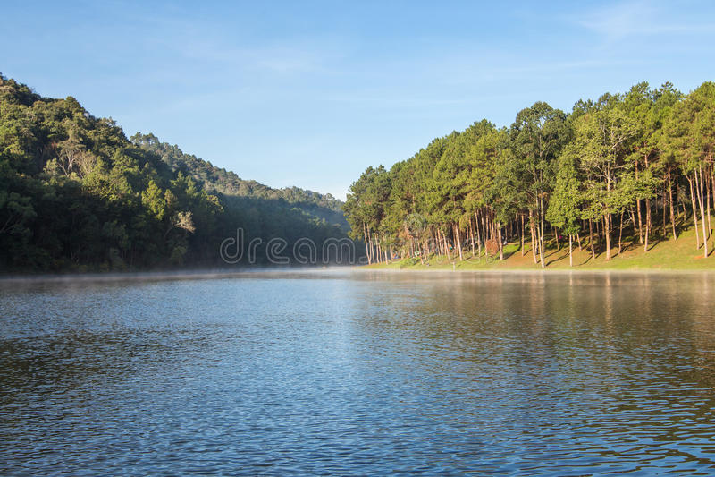 剧痛Ung林业种植园在冬天 免版税库存图片
