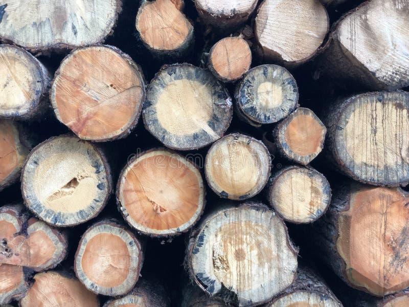 剪切木 库存图片